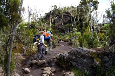 Climbing Kilimanjaro, Machame Route