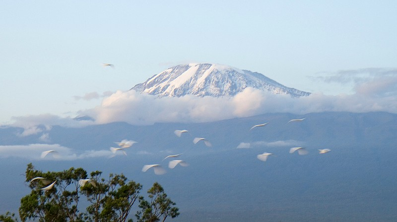 Kilimanjaro floating above the clouds