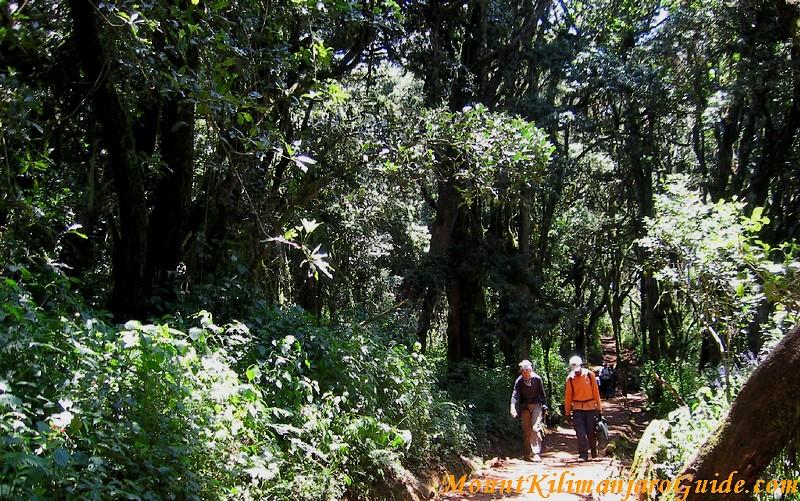 Start of the Marangu trail
