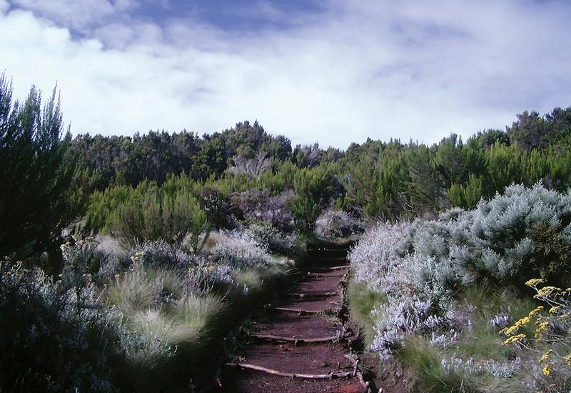 Moorland zone on Kilimanjaro