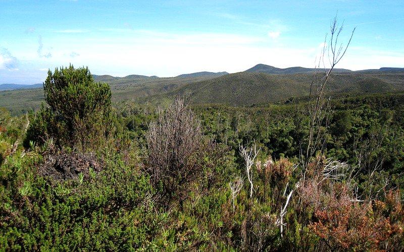 Moorland on the Lemosho Route