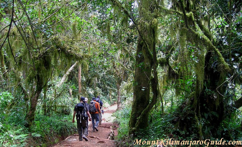 Walking on Kilimanjaro. Training should be geared towards this.